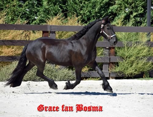 Grace fan Bosma