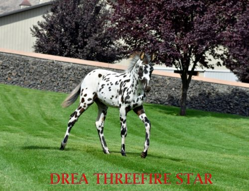 (Palouse) Drea Three Fire Star