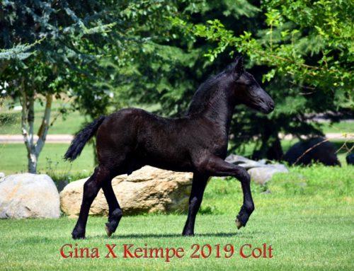 Gina X Keimpe van de Demro