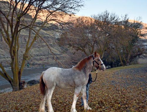 Nevada Balou