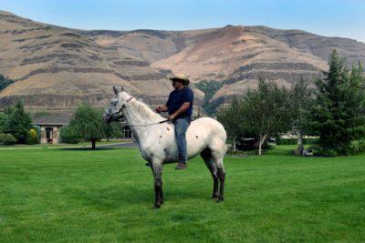 Appaloosa Horses For Sale – Dalosto Farms, LLC