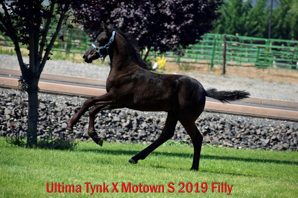 Ultima Tynk X Motown S